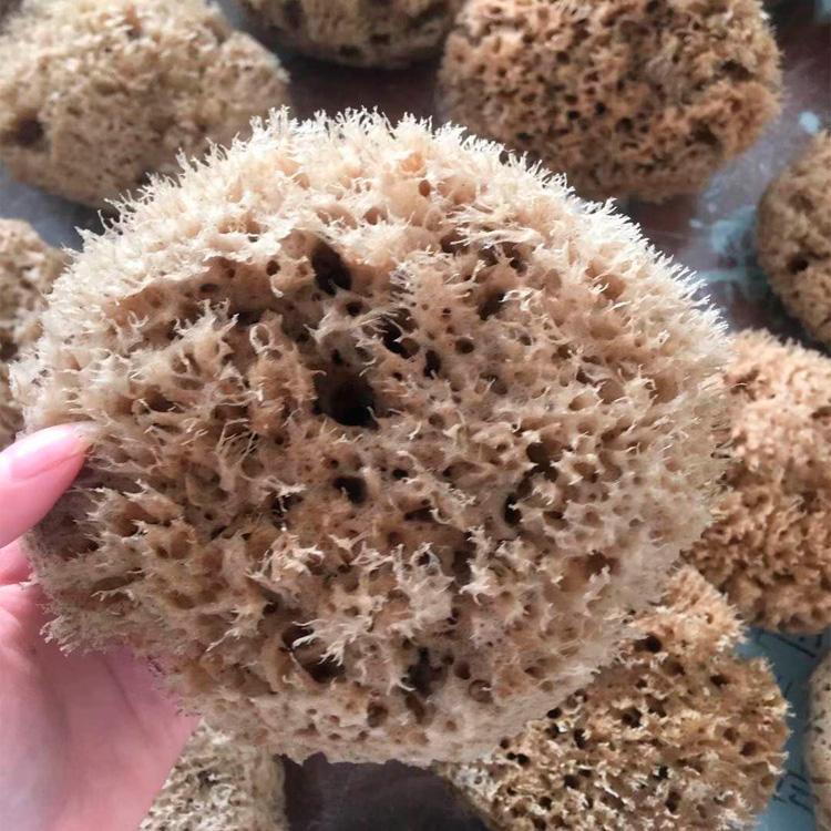 天然海藻绵